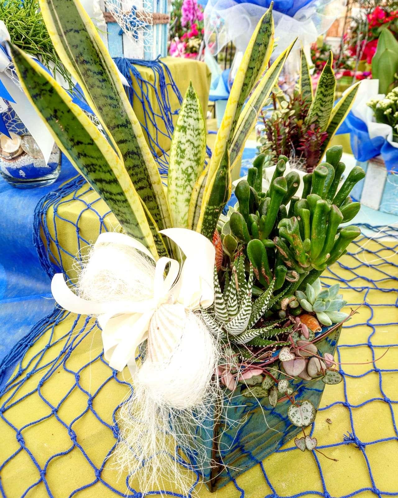 Sansevieria e altre piante grasse