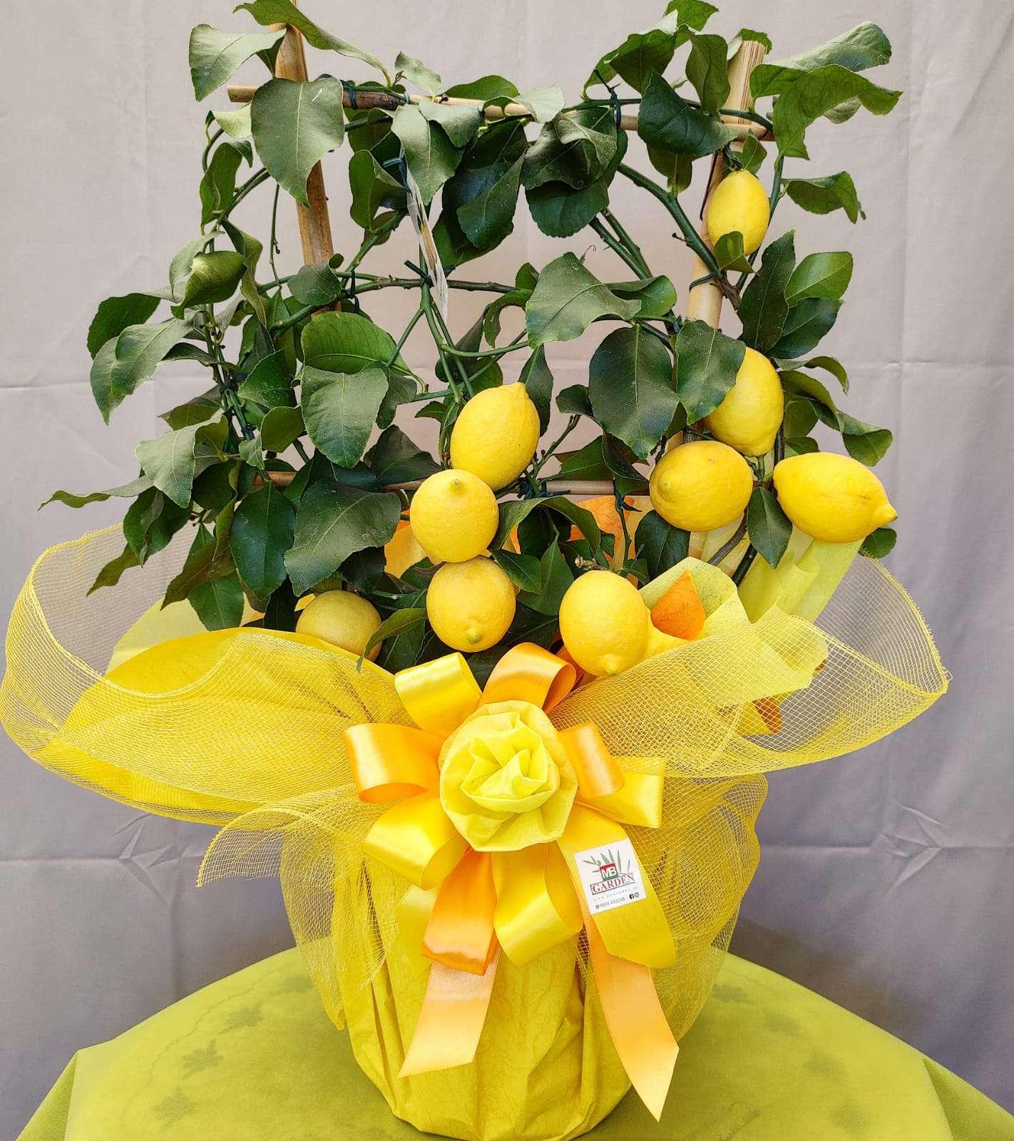 Limone confezione regalo